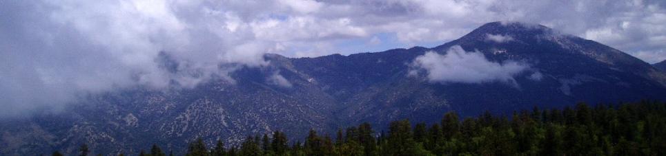 Camp de Benneville Pines
