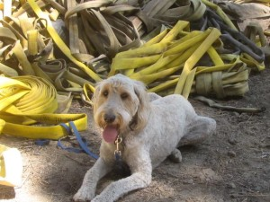 Picture of dog Daisy with firehose